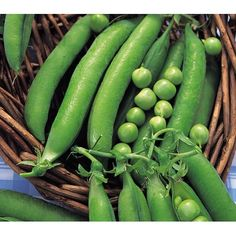 Shop for Vegetables Pea Meteor Dwarf First Early 420 Finest Seeds. Starting from Compare live & historic seeds and plant prices. Plants Online, Dwarf, Free Uk, Cucumber, Seeds, Vegetables, Allotment, Ebay, Plant