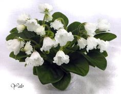African-Violet-Alans-White-Feather-Leaf-Bell-Variety