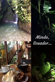 Should you visit Mindo Cloud Forest in Ecuador? What should you expect? What can you see and do? What might you not like? How do you get there? Find out before you go... #travel #ecuador #mindo #CloudForest #SouthAmerica