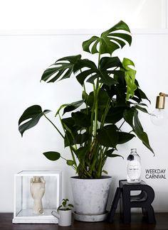 senkki,vintage,kasvit,sisustus,sisustusidea