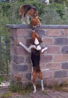 Romeo and Juliet :)))