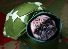 I'm a turtle!