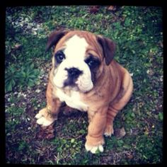 I want one!!! One of these days!!!