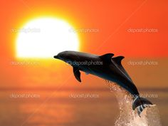 δελφινια ηλιοβασιλεμα - Αναζήτηση Google