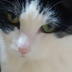 #猫#18歳#愛猫 18歳の家族は毎日元気です❗ ネットで調べると人間で言うと88歳のお婆ちゃんです。 ご飯食べたのにすぐに餌場の前に座ったり、トイレ失敗したりと。 少しボケの症状が出ちゃてるのかな⁉ 可愛いけど少し淋しい。