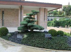 giardini con macrobonsai - Midorigiardini