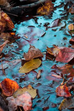 Let the Leaves Fall Where They May by WonderLifeImages on Etsy