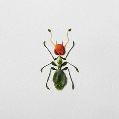 Using flowers, leaves, twigs, and seeds, Canadian artist Raku Inoue creates intricate portraits of insects. Bunch Of Flowers, Summer Flowers, Dried Flowers, Patterns In Nature, Beautiful Patterns, Leaf Animals, Leaf Crafts, Insect Art, Bugs And Insects