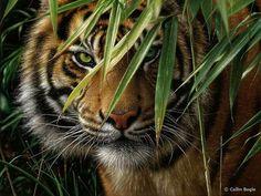 Beautiful Tiger Image