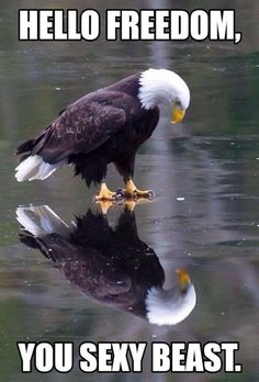 """""""Eagle on Ice"""" ~ Photo by James Geddes. Use with week Bible Club. Explore pictures of eagles. The Eagles, Bald Eagles, Eagles Live, Pretty Birds, Beautiful Birds, Animals Beautiful, Animals Amazing, Animals And Pets, Funny Animals"""