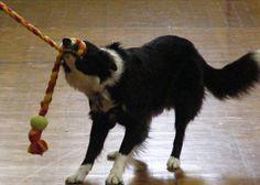 Durable Fleece Machine Washable Dog Tug Toy by TammysTugs on Etsy, $11.99