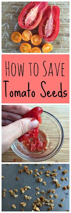 Learn how to save your own tomato seeds by fermenting to increase the germination rate!