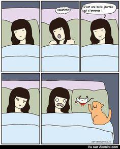 Humour Noir N°5709 - Les chats aiment offrir des cadeaux !