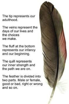 Saw once again this on Native American Board. Again, non natives lumping us all together.Each tribe is different and no we don't all see a feather meaning this. Learn your tribe, don't lump us all together. Native American Spirituality, Native American Symbols, Native American History, American Indians, Cherokee Symbols, American Women, Native American Feather Tattoo, Cree Indians, American Indian Quotes