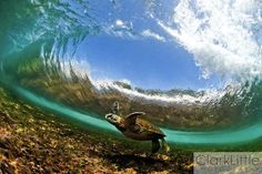 Turtles ritaparada