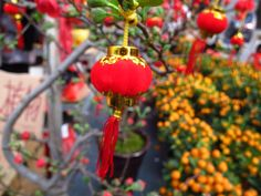 At the Chinese New Year Flower Market: Red Lantern by Timothy Dutton on Chinese New Year Flower, Chinese New Year 2014, Overseas Chinese, Visit China, Red Lantern, Flower Market, Guangzhou, Lanterns, Christmas Ornaments