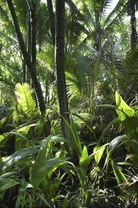 How to Create a Jungle Themed Hallway thumbnail