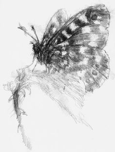 Wood butterfly, Artist Sean Briggs producing a sketch a day, prints available at https://www.etsy.com/uk/shop/SketchyLife  #art #butterfly #drawing #http://etsy.me/1rARc0J