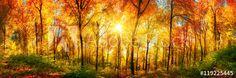 Wald Panorama mit Sonne an einem schönen Tag im Herbst