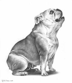 She's a hungry bulldog. I just adore these dogs, they're one of my favourite breeds (but only after the pugs ) I hope you like it Zsófia Hungry Bulldog Bulldog Mascot, Bulldog Puppies, Animals And Pets, Cute Animals, Bulldog Drawing, Bulldogs Ingles, Olde English Bulldogge, Basic Dog Training, Black And White Dog