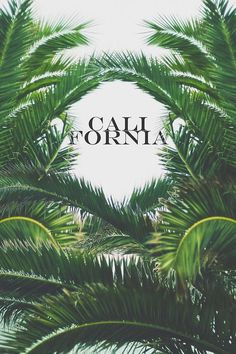 Image shared by Bella Montreal. Find images and videos about summer, trees and california on We Heart It - the app to get lost in what you love. Website Design, Web Design, Logo Design, Brand Design, Flyer Design, Road Trip Route 66, Echo Park, Pale Tumblr, Lettering