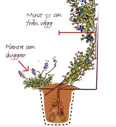 rabatt buskar Number One home decor shopping online Outdoor Flowers, Container Plants, Garden Planning, Garden Pots, Garden Inspiration, Beautiful Gardens, Gardening Tips, Flower Pots, Outdoor Gardens