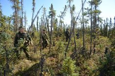 20 August 2012 Tsiigehtchic, Northwest Territories, Canada Soldiers from the Third Battalion, Princess Patricia's Canadian Light Infantry (3 PPCLI), Immediate Response Unit, sweep the woods west of Tsiigehtchic, NT, during a CF assistance to RCMP scenario on Operation NANOOK 2012.