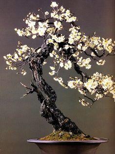 """Jimmy """"James Reid"""" Adamme   Beautiful Japanese flower bonsai."""