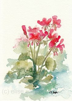 Pink Red Geraniums Flowers, Original Watercolor Painting, 5x7