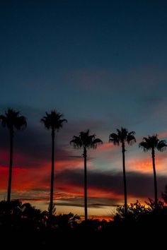 Miami Sunset by Terry McMaster #miami