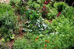 mein Pflanzenreich. Unser Garten. Unser Bauerngarten