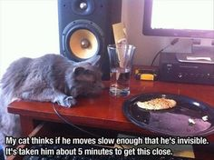 Attack Of The Funny Animals - 25 Pics