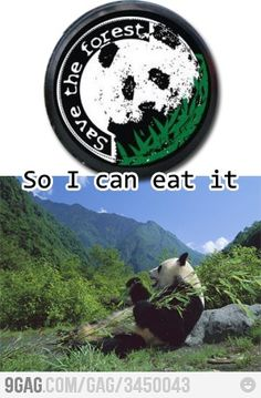 Pandas are selfish creatures