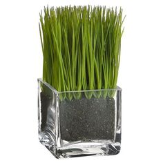 "6.5"" Lemon Grass in Glass Vase Green (Pack of 6) *** Check this awesome product by going to the link at the image."