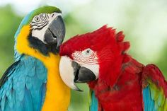 Parrot Mountain and Gardens is nestled on four acres with hundreds of tropical birds