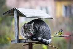 Ce n'est pas Free-Ket mais je trouve la photo très subjectif et très bien prise.  chat-oiseau
