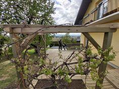 Weinlaube gebaut von diehandwerker.at Plants, Pictures, Garden Arbor, Plant, Planets