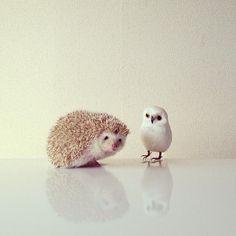hedgehog & owl