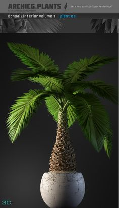 cool 34. Bonsai tree model Download here: http://3dmili.com/decoration/tree/34-bonsai-tree-model.html