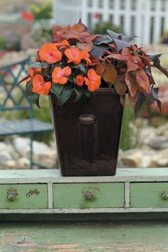 Container or hanging basket recipe idea that will grow in the shade. Create by using New Guinea Impatiens, Sweet Potato Vine, and Coleus. Container Flowers, Container Plants, Container Gardening, Vegetable Gardening, Garden Planters, Planter Pots, Planter Ideas, Balcony Gardening, Fall Hanging Baskets