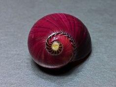 Neritina, Philippines, 15 mm