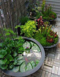 "Awesome pond pot/container water garden next to a couple ""bog"" container gardens. See more great ideas @ www.ContainerWaterGardens.net #Ponds #creativecontainergardeningideas"