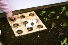 Square foot gardening tool! This is the 9 plants per square foot, she also has a 12 plants per square foot example! #Squarefootgardening