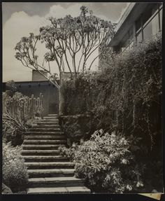 Escalera desde el jardin, Casa Cetto, calle del Agua 130, Jardines del Pedregal, Ciudad de México 1949  Arq. Max Cetto  Foto. Elizabeth Timberman -   Stairs from the garden, Casa Cetto, Agua 130, Pedregal, Mexico City 1949