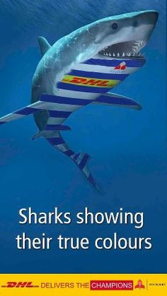 Stormers vs Sharks! Shark Show, Rugby Pictures, True Colors, Colours, Ocean Creatures, Lol, Sharks, 50th Birthday, South Africa