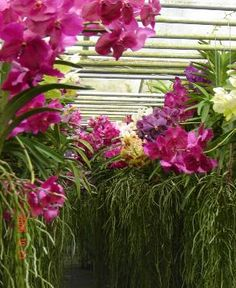 one of the best orchid greenhouses I've ever seen