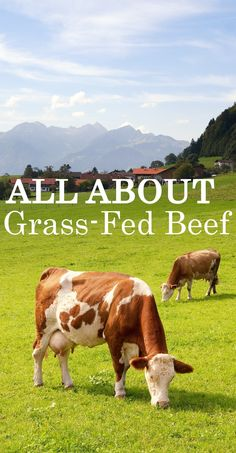 Grass-fed beef is all the rage these days, but what does it really mean? Cut through the hype and get the details on grass-fed beef now! Raising Farm Animals, Raising Chickens, Raising Cattle, Mini Cows, Cattle Farming, Beef Farming, Future Farms, Vertical Farming, Beef Cattle