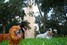 Dog Day of Summer Lake Wales, FL #Kids #Events