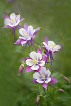 Top 15 Cold Hardy Perennials That Can Withstand The Harshest Winter | Postris