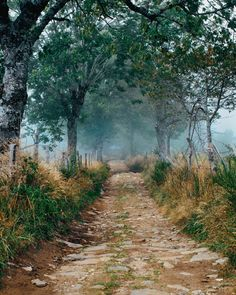 """If you are tired, injured, or fall in love with a town or a person, you can stop."" Exploring on foot, he concluded, is ""simultaneously the simplest and most intense way to see the world.""  I often tell people that what I found on the Camino was a quiet place, a simple reminder of the way life could be. Some would say that is the same as finding God—something to hold on to when times are hard."